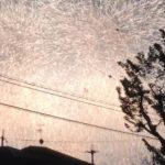 PL花火芸術2019に行ってきました!穴場は藤沢台小学校前!(藤沢台公園・藤沢台動物病院前)